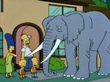 Bart dostane slona