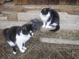 Moje mačičky