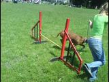 psíkovia (agility) v BB na MDD :D