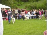 Výstava psíkov 4.5.2008