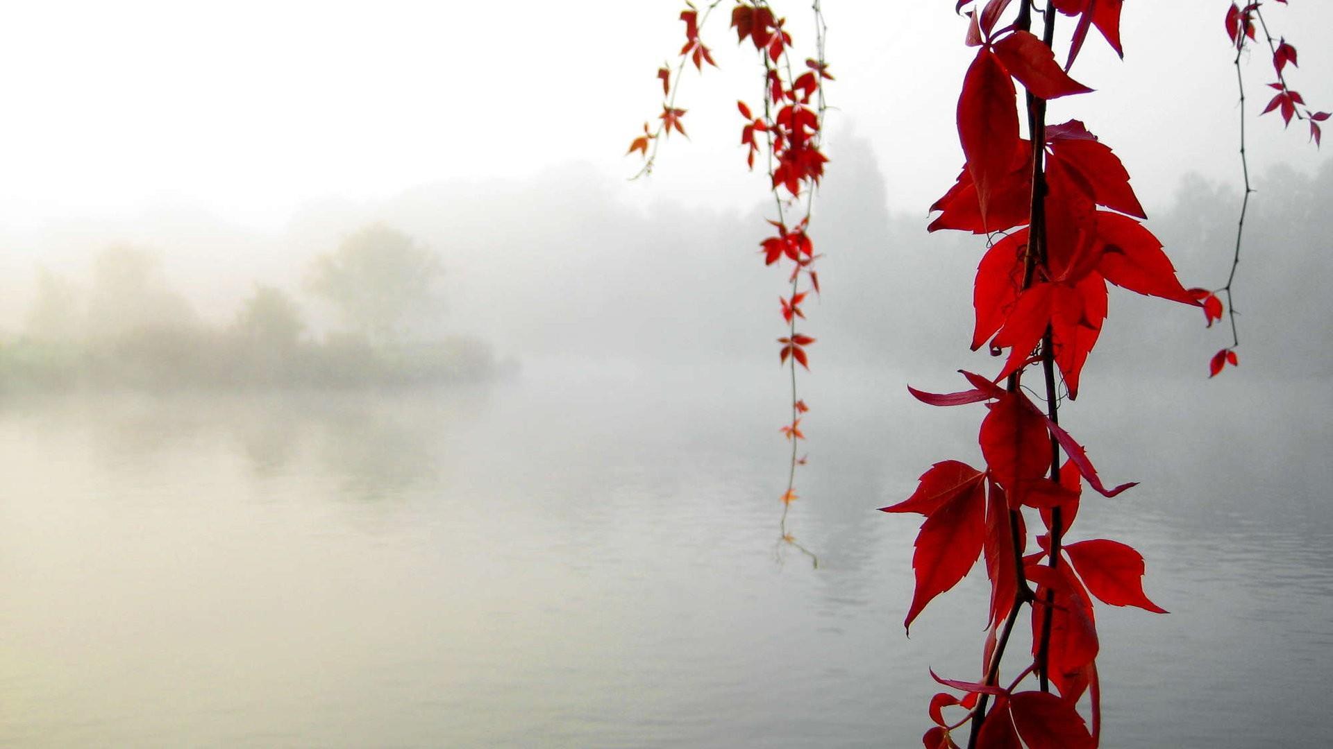 Хентай листья клёна 9 фотография